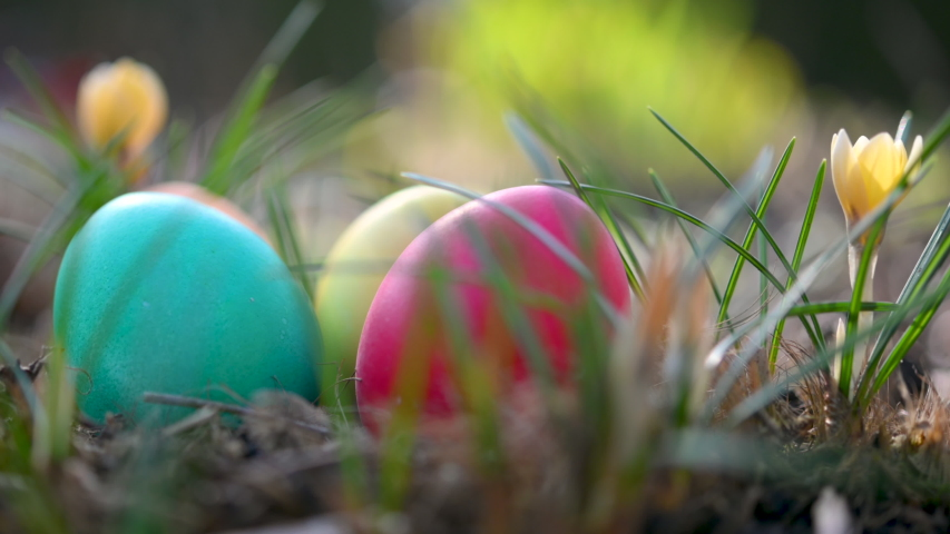 Close-up of colorful easter eggs lie near blooming flowers in the garden. Easter Egg Hunt. Easter concept background. | Shutterstock HD Video #1047521248