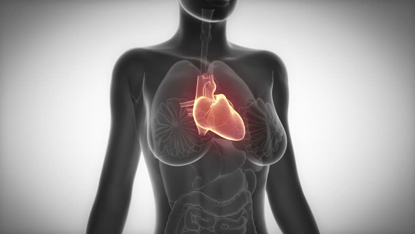 Heart Female Organ Anatomy Scan Stock Footage Video (100% Royalty ...