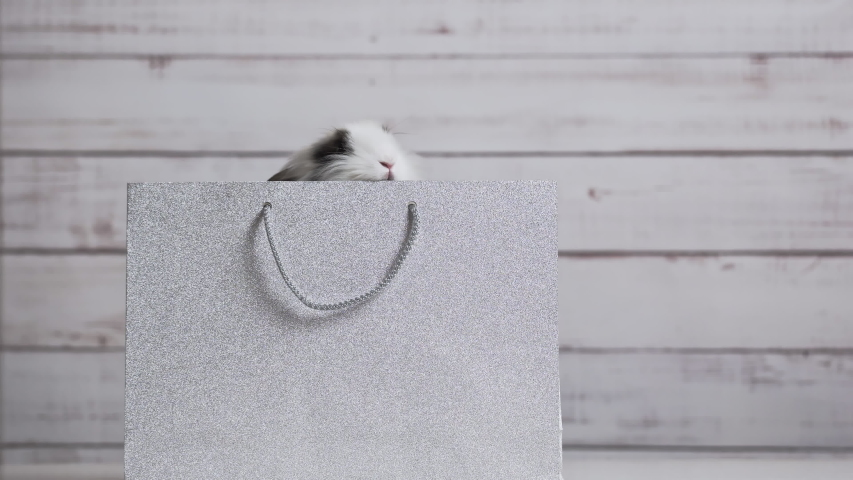 Close-up of cute white bunny is sitting in silver paper bag. Concept of gift and present, Easter and Christmas Holliday | Shutterstock HD Video #1049540818
