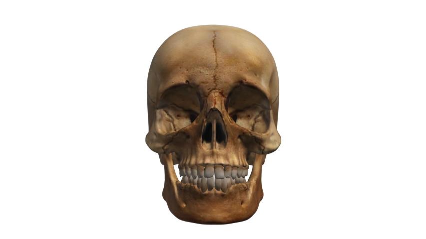 Human skull 3d rotating animation loop seamless alpha matte  | Shutterstock HD Video #1049670718