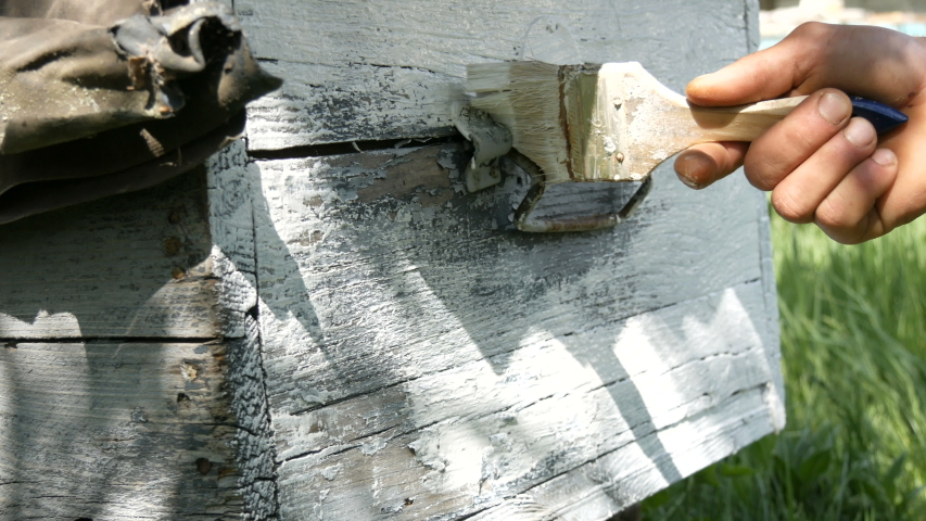 Spring preparation of a bee hive for the summer. Male beekeeper using special white paint and brush to paint wooden boards. | Shutterstock HD Video #1049865118