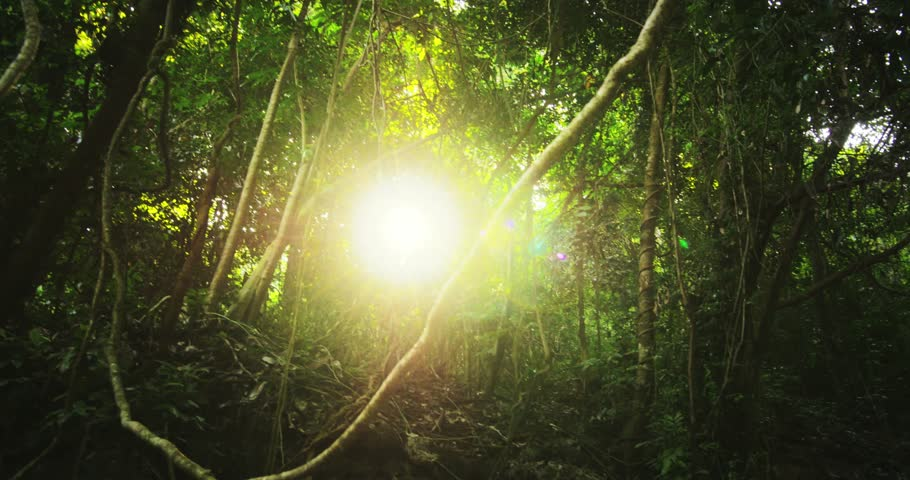 Sun rays light shines through trees and branches of jungle forest canopy. Beautiful background of exotic tropical flora and green vegetation in rainforest | Shutterstock HD Video #10599785