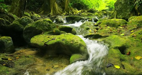 Green and wet mossy stones and rocks along mountain river stream with many curved cascades and small waterfalls surrounded by greenery of forest vegetation