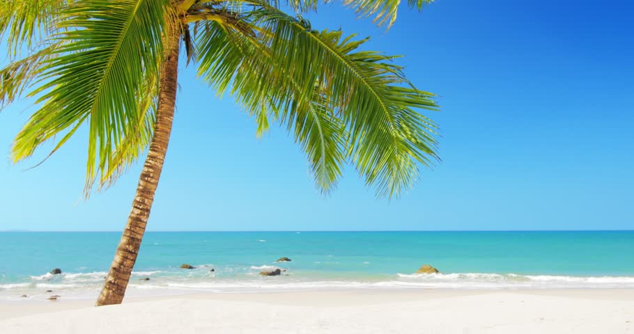 Tropical island vacation idyllic background. Exotic sandy beach and palm tree on sea coast at sunny day with blue sky. Tranquil summer scene  | Shutterstock HD Video #10693076