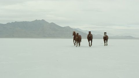 Slow motion of horses running across the Bonneville Salt Flats in Utah.