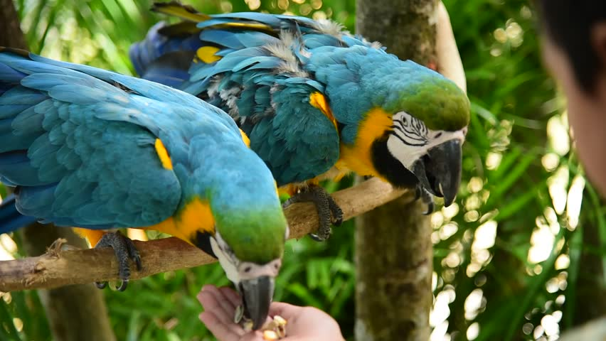 Image result for macaw parrot feeding