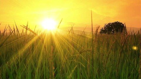 The view rice farms in Thailand  : Crane shot