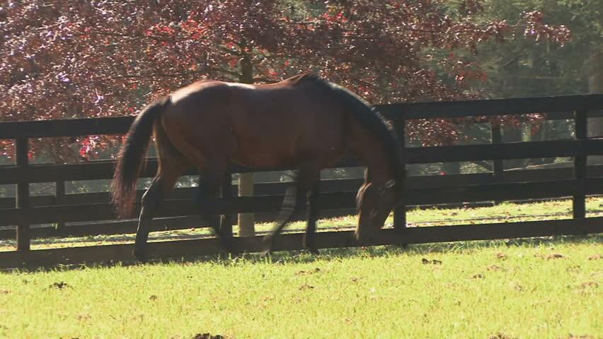 Header of horse