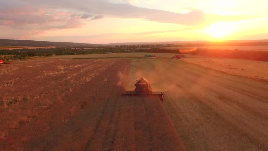 Aerial Of Combine Harvesting Wheat Field Crop Sunset Agriculture Food Production Cereal Bread Nutrition Healthy Eating Harvest Concept | Shutterstock HD Video #11017499