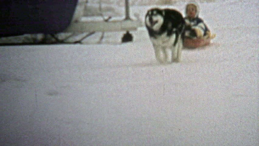 USA - 1973  Dog wildly pulling child on winter snow sled. 2b7ea6040311
