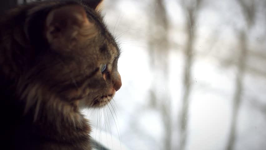 Black Cat Winter