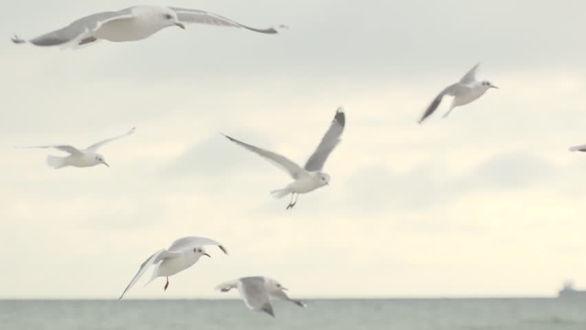 Seagulls hover in the sky. Slow motion.