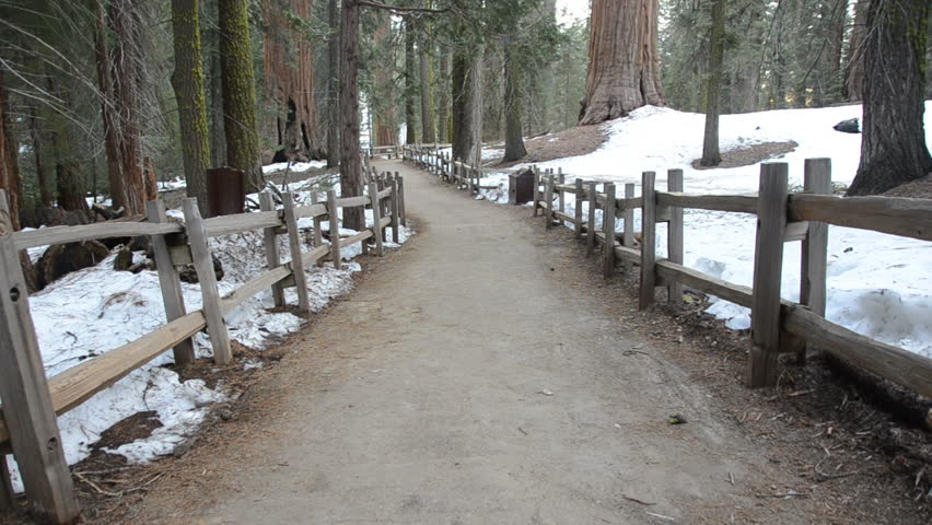 family hikes along a trail through giant sequoia forest