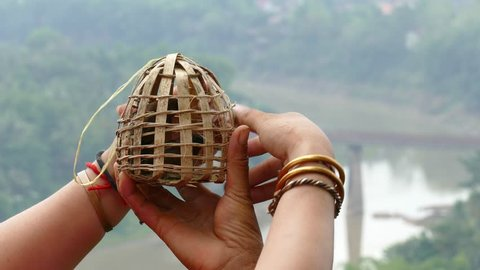 Hands of old Laotian woman release Scaly-breasted Munia (Lonchura punctulata) birds from wicker cage.