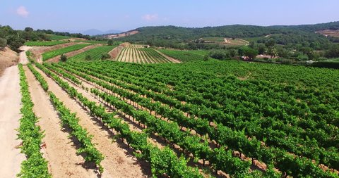 HQ Aerial Drone Video (Ultra HD) of vineyards. Location: French Riviera in St. Tropez. The typical french vineyards produces one of the best wines in Southern France.