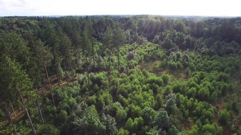 Aerial view of a Danish forrest in Zealand Denmark