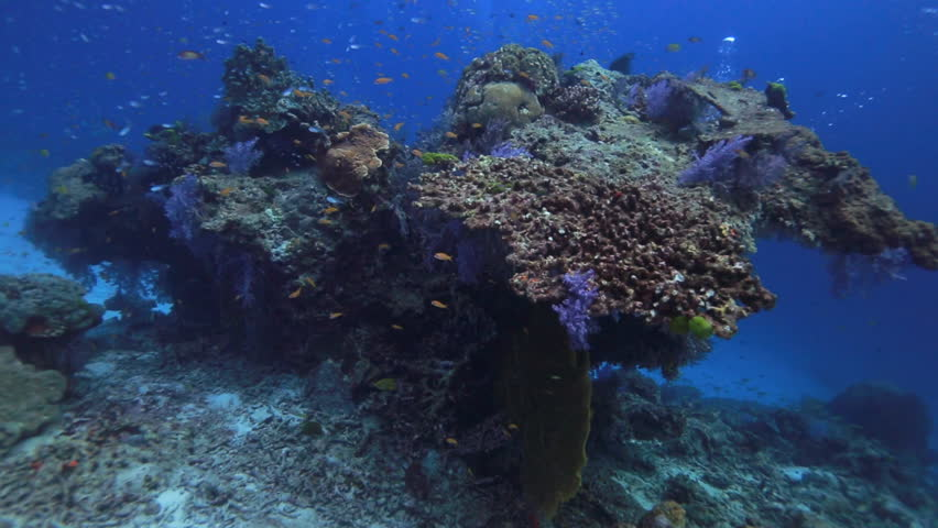 Underwater drift over beautiful coral reef with fish swimming around at Similan Islands National Park Thailand