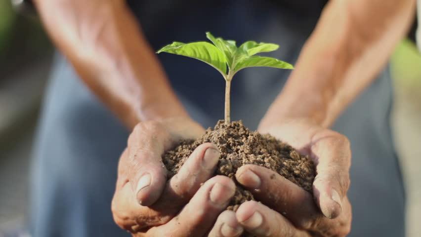 Man holding a little green plant | Shutterstock HD Video #1150918