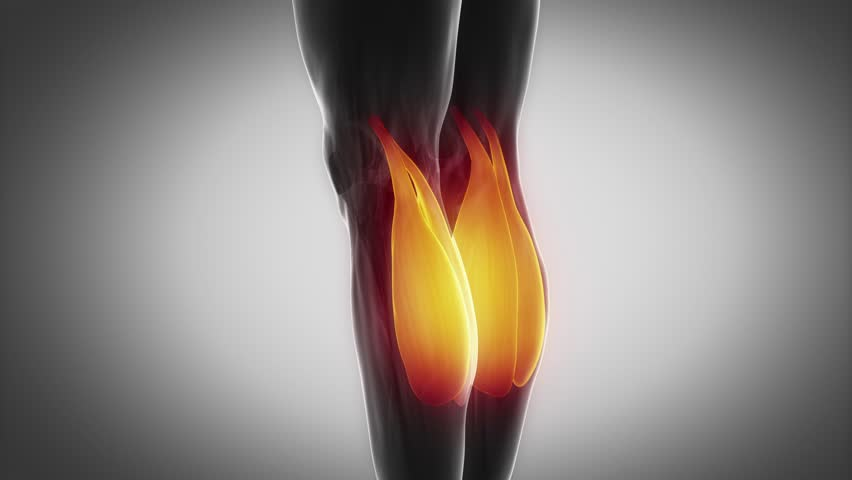 Gastrocnemius Muscular Anatomy In Stock Footage Video 100