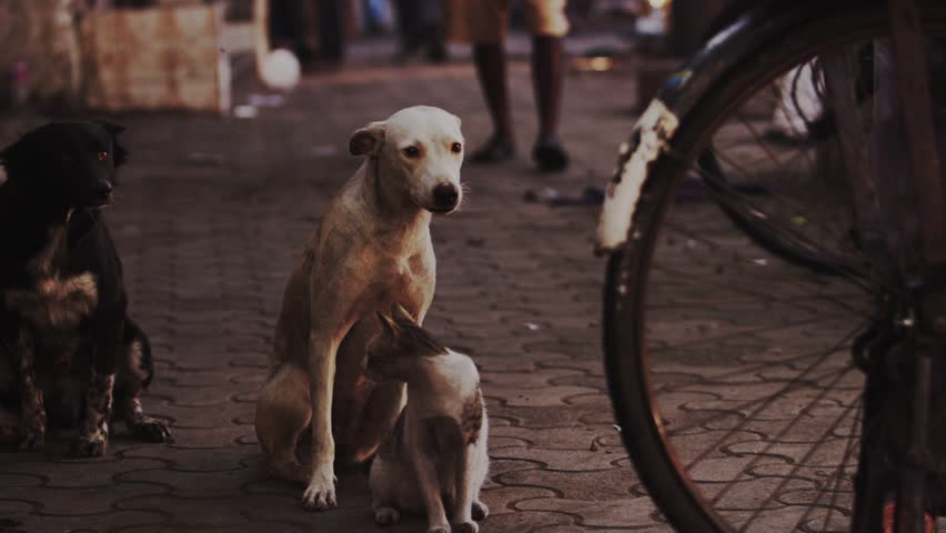 Street dog and cat together in Bombay