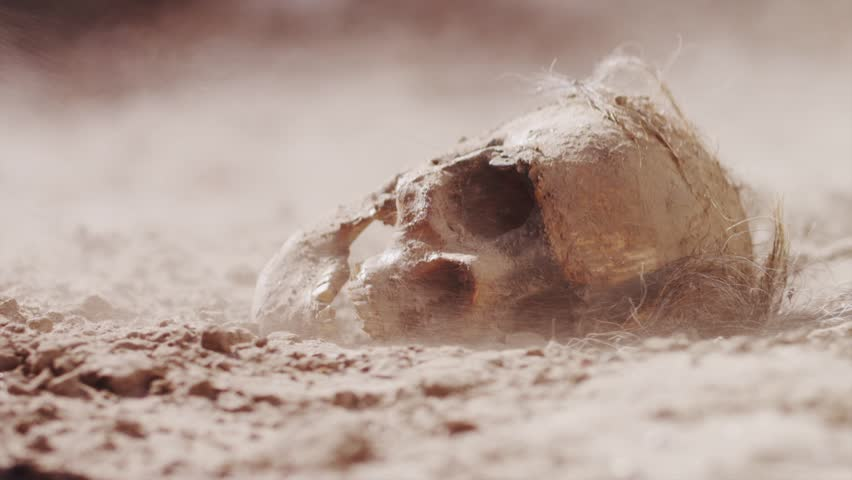 Ancient Skull in Desert | Shutterstock HD Video #11819597
