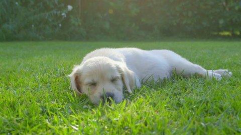 Cute Puppy in the Garden - Sleeping
