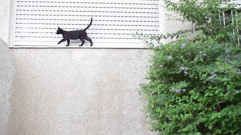 Small baby cat walks across balcony
