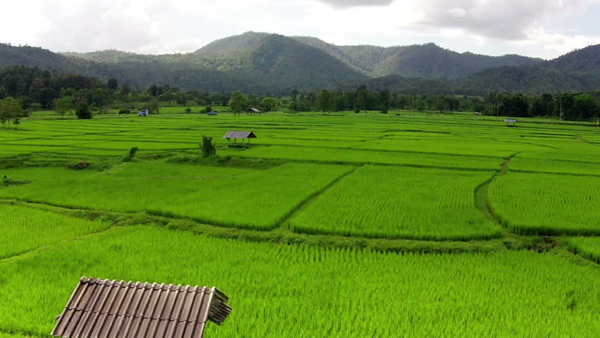 Aerial shot rice field and mountain view  | Shutterstock HD Video #11971718