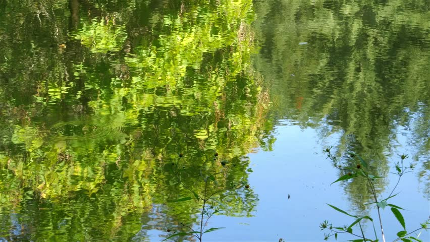Lake water ripple,forest trees and blue sky reflection on the surface,beautiful scene of nature detail,close up,sunny day,weather forecast,symbolic shot. | Shutterstock HD Video #12004028