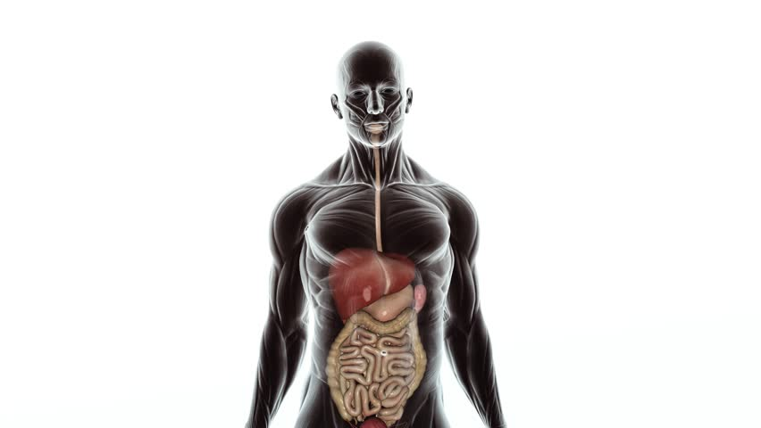 Sick guts and disease on digestive system scan animation from healthy guts and digestive system scan animation from human anatomy walking towards camera over white background ccuart Image collections