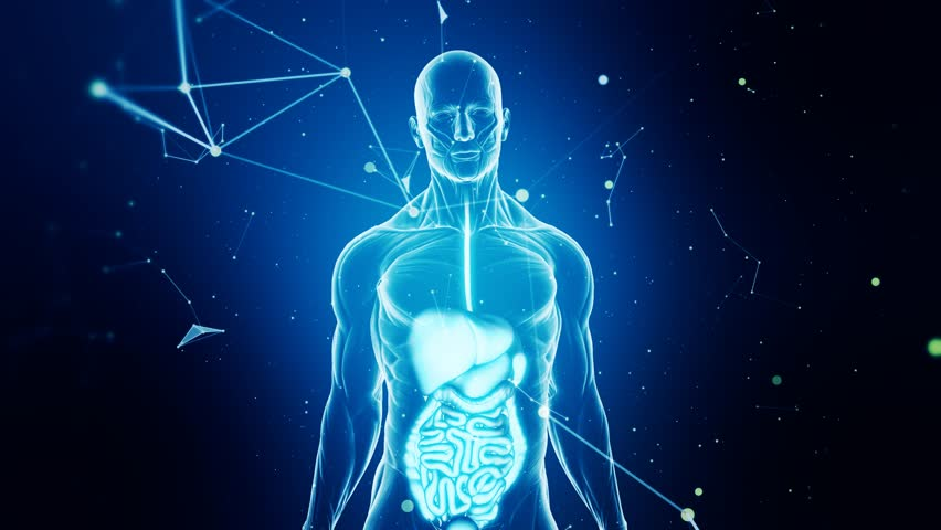 Guts and digestive system scan animation from human anatomy walking guts and digestive system scan animation from human anatomy walking towards camera over blue futuristic and abstract background seamless loop stock footage ccuart Choice Image