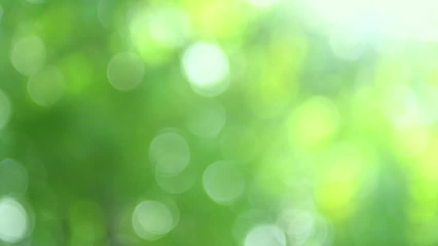 Nature blurred green background. Beautiful Sun shine through the blowing on wind tree green leaves. Blur abstract bokeh with sun flare. Sunlight. Sunflare | Shutterstock HD Video #12063068