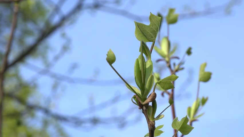 Header of saddletree