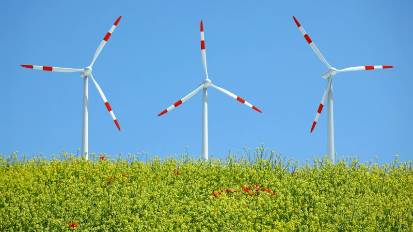Three windmills rotating in wind behind rape field