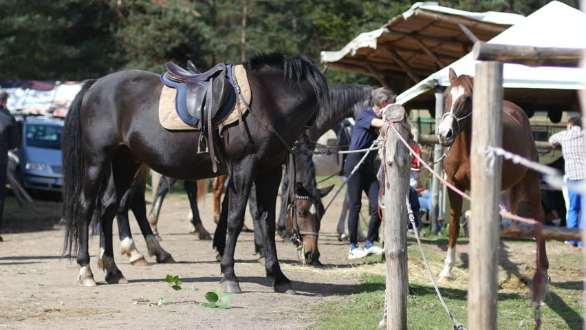 Plana, Bulgaria - OCT 04, 2015 - Nature center for horse close contact kids therapy and rehabilitation horseriding club - adult people with kids learn to ride a horse back and play with horses | Shutterstock HD Video #12134912