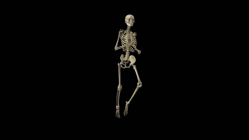 Funny Skeleton - Running Loop - 03 - Side Angle - 3D Animation - Alpha Channel - 25 fps | Shutterstock HD Video #12142997
