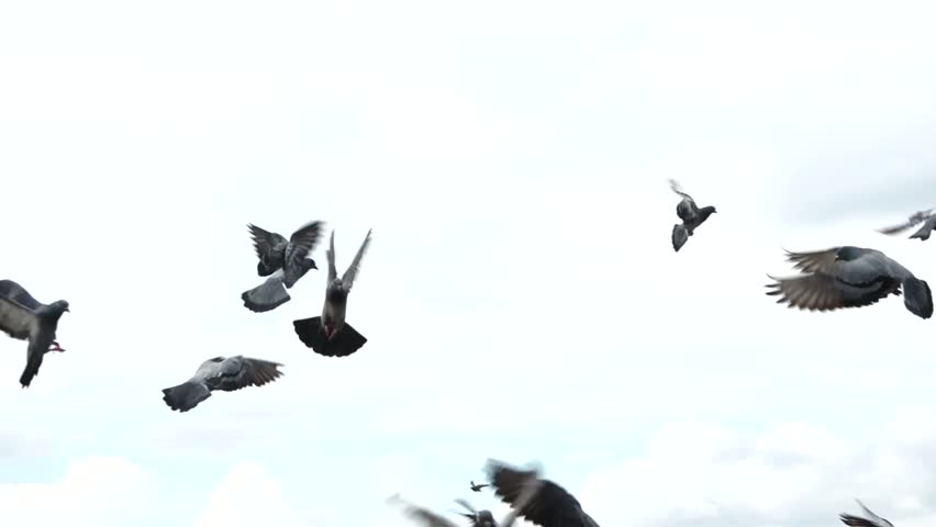 A lot of pigeon birds flying to the sky