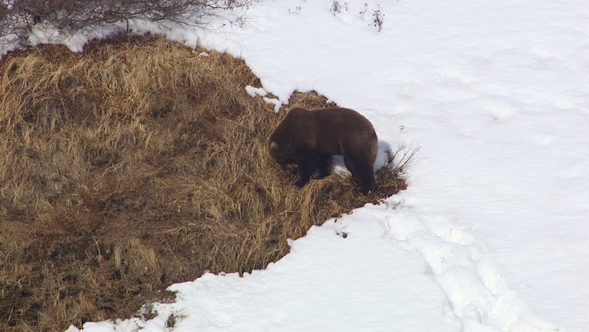 MS AERIAL ZI Shot Of Grizzly Bears Lair At Tordrillo Snowy - United states mountain ranges