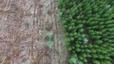 Flyover aerial shot of forest and deforestation over the mountain with trees chopped down, New South Wales, Australia