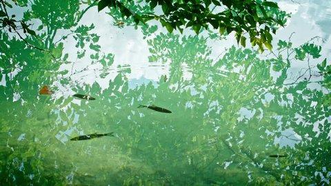 National Park Plitvicka jezera. Europe. 4K