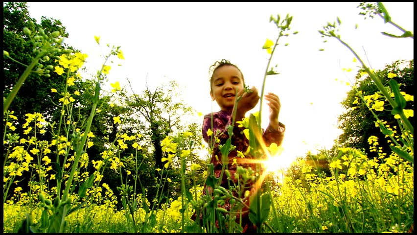Beautiful little girl in field of flowers