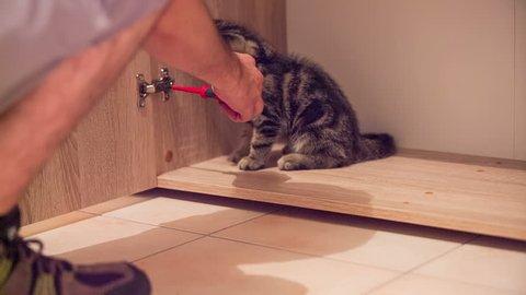 Kitten inside a closet help screwing door. Baby cat hiding inside the closet and biting screwdriver when person wants to screw together door hinge.