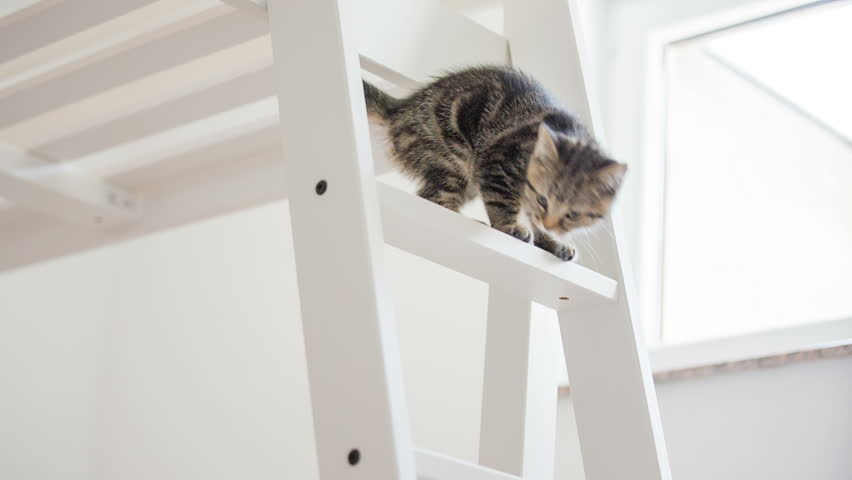 Kitten climbing down the ladder almost falling. Baby cat walking on tall wooden bed and trying to get down over the ladder almost falling down, catching up. #12716735