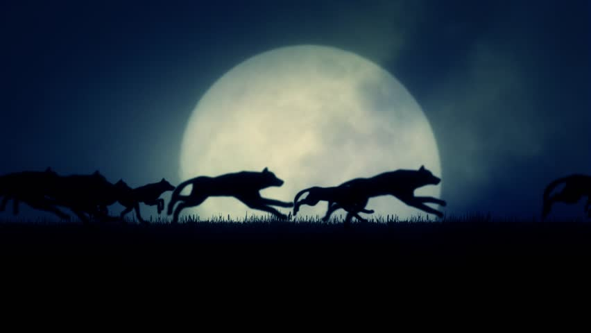 A Pack of Wolves Running on a Rising Full Moon Background | Shutterstock Video #12719375