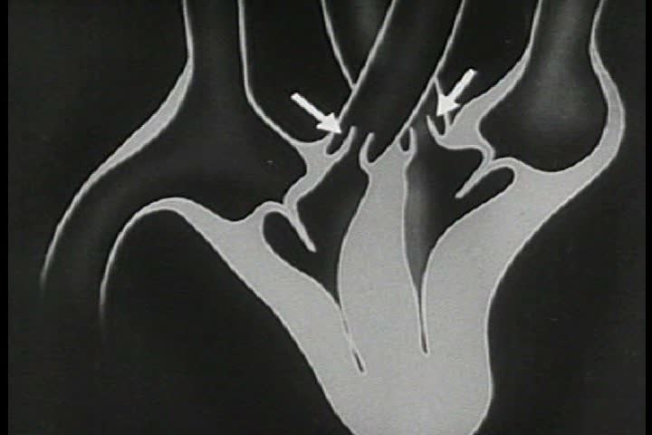 Stock Video Of 1930s The Heart Has 4 Chambers The Auricles Act As