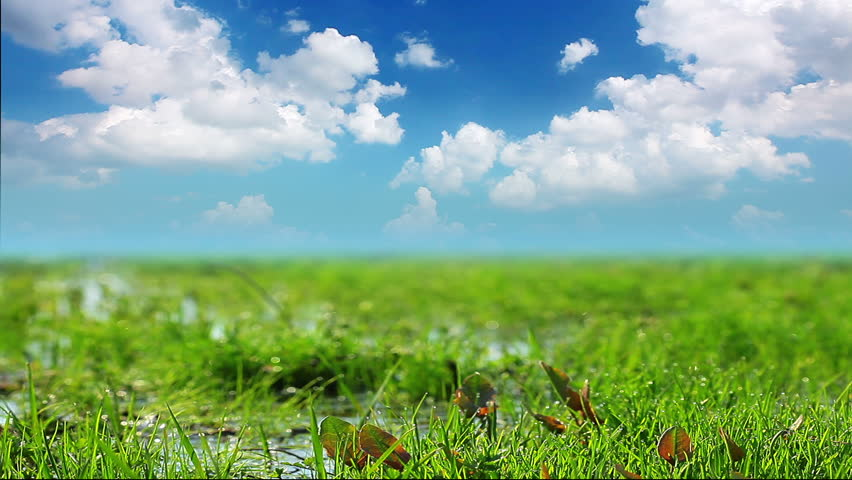 grass background hd yellow green grass on background cloudy sky green grass on background stock footage video 100 royaltyfree