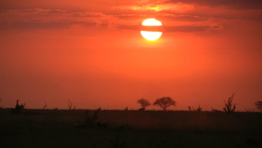 elephants walking in the setting sun 3
