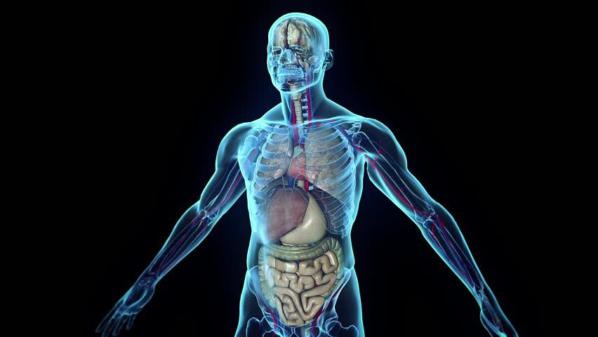 3d human body in loop stock footage video  100  royalty