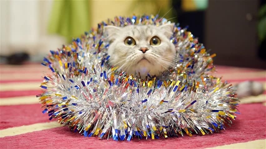 Christmas tinsel and scottish fold cat 2