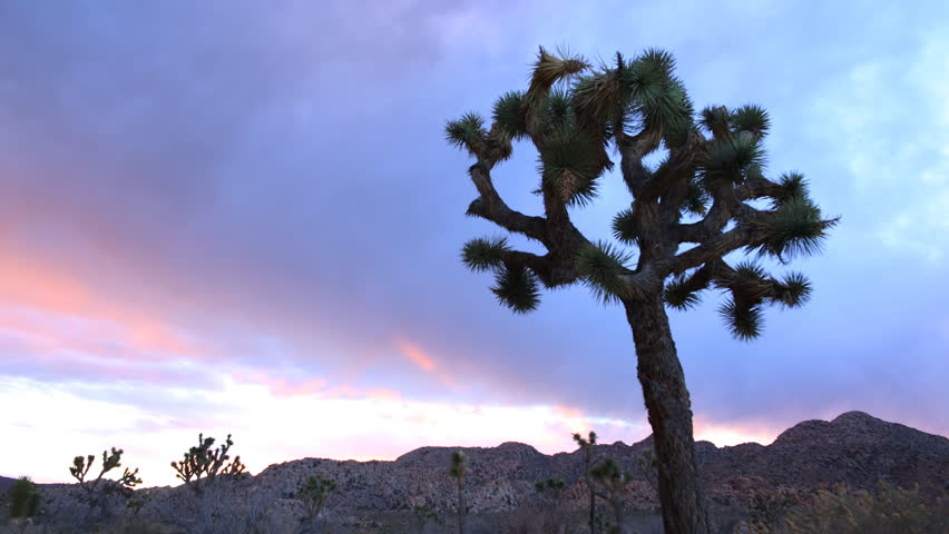 Time lapse footage of Joshua Tree during sunset afterglow at Joshua Tree National Park, California